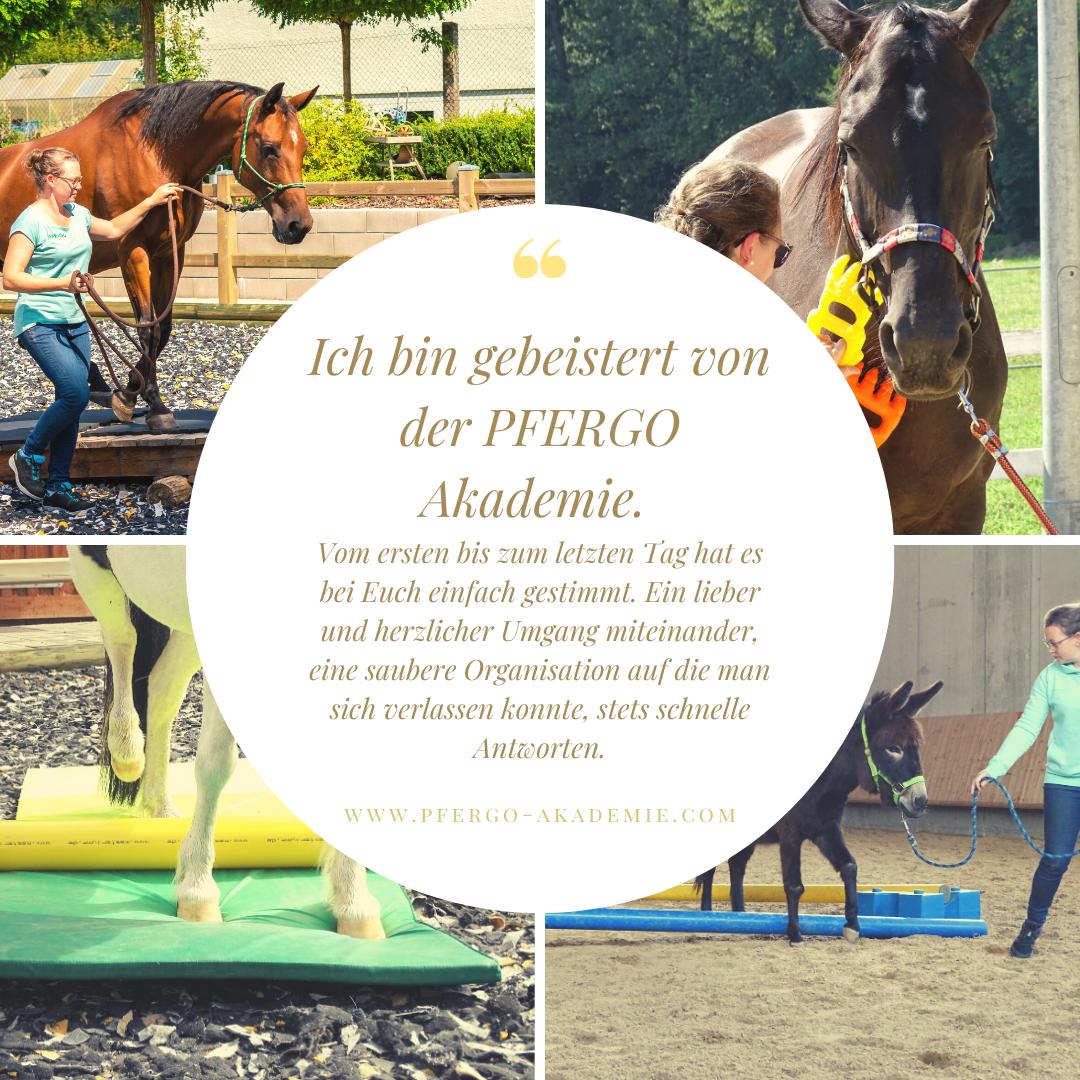 Ergotherapie für Pferde: Die Ausbildung bei PFERGO