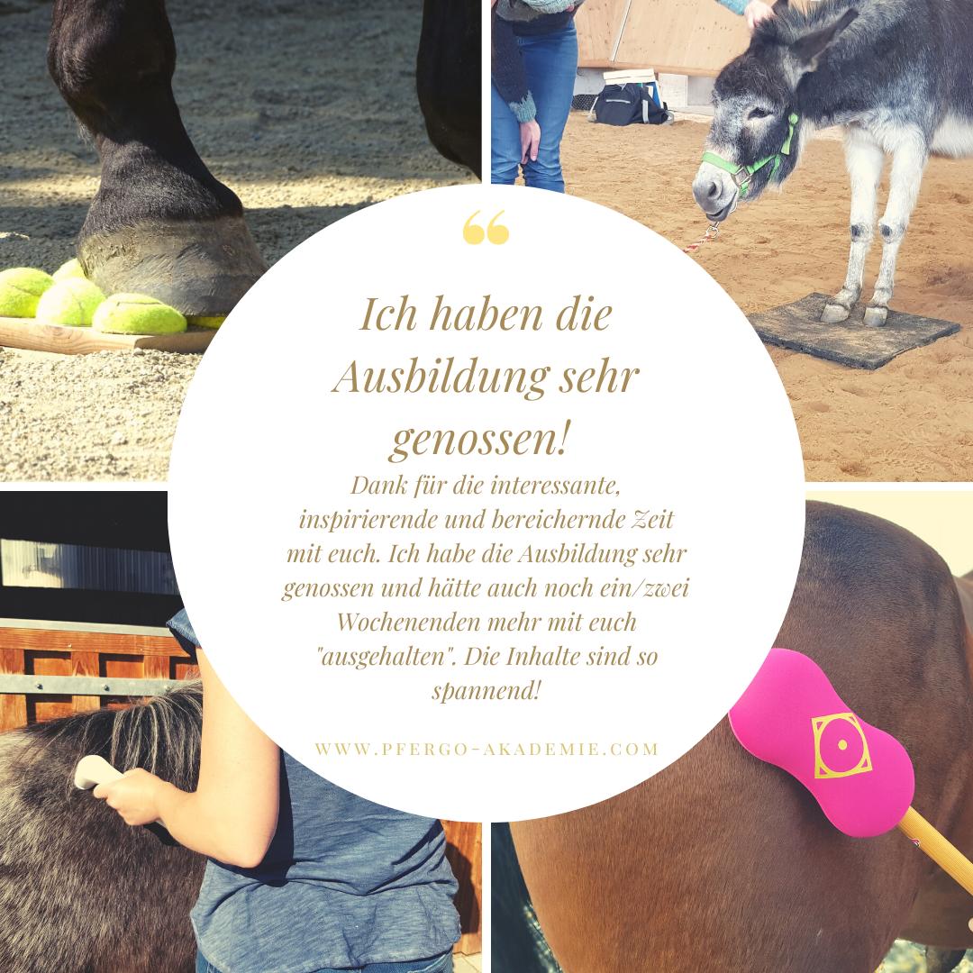 Pferdeergotherapie: Die Ausbildung in der Ergotherapie für Pferde bei PFERGO
