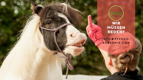 Pferde-Ergotherapie: Ausbildung zum Pferdeergotherapeuten