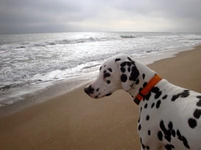 ich geniesse den Blick über das Meer