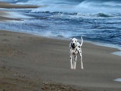 juhui, das Meer