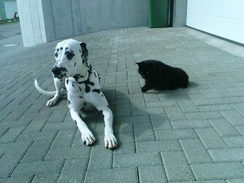 Dunja mit ihrem liebe Büsi, de Kyra