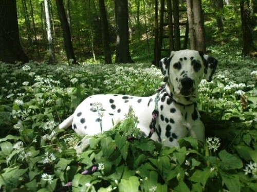 im Wald, im schöne grüene Wald han ich es Plätzli wo mer gfallt...