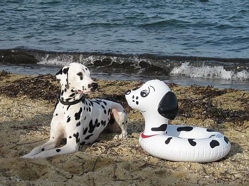 was will den dieser Möchtergern-Macho am Strand von Ste-Maxime?