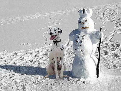 wer ist jetzt der Schneemann und wer Diva?