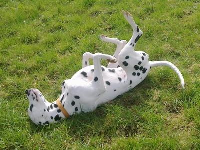 Rückenmassage im warmen Gras