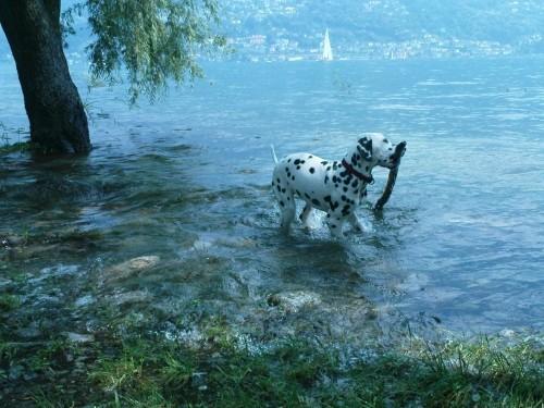 bella Ticino, es Bad im chüele Nass mit eme grooosse Stäcke