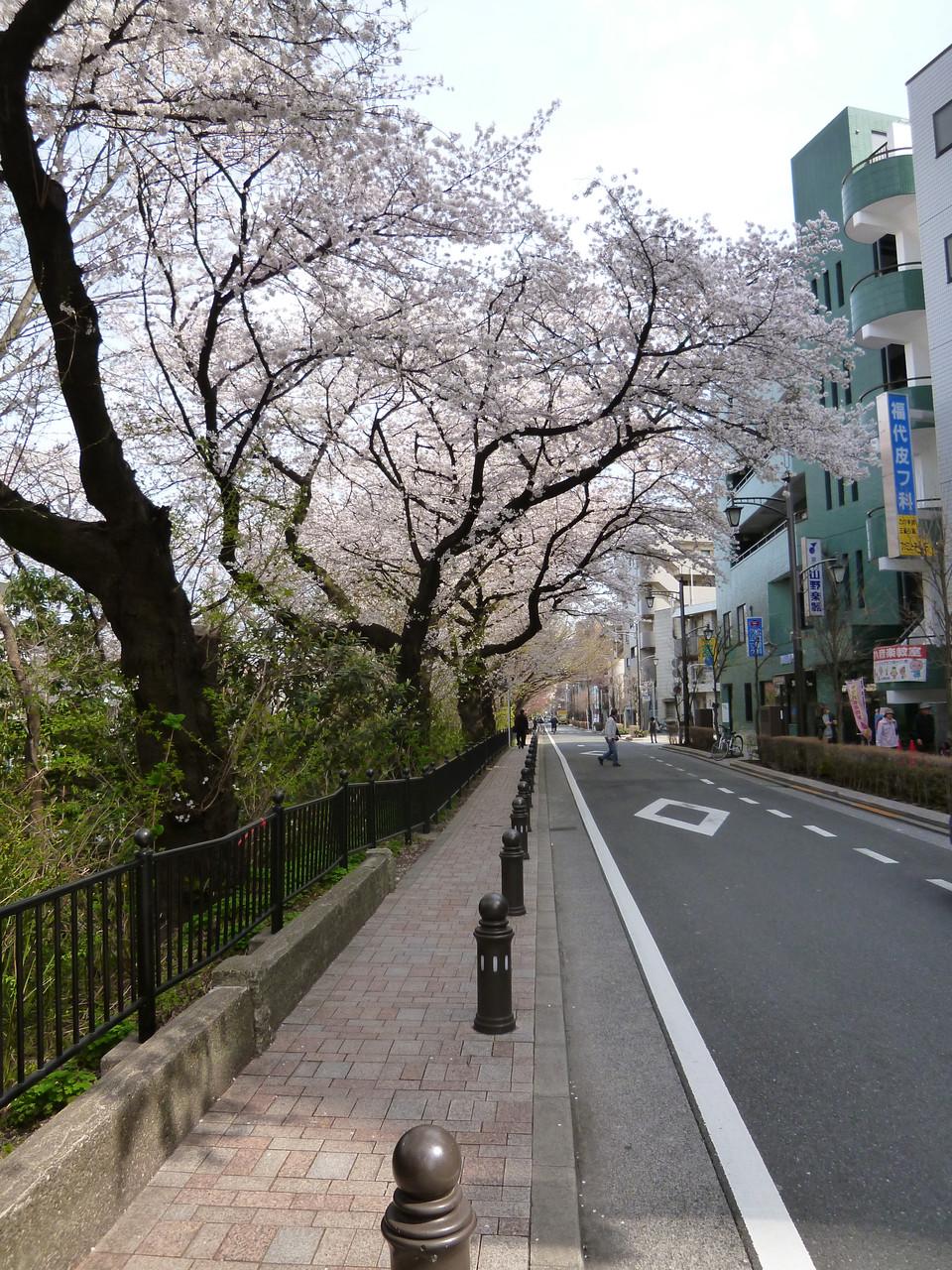 風の散歩道/玉川上水沿い(2014.4.1)