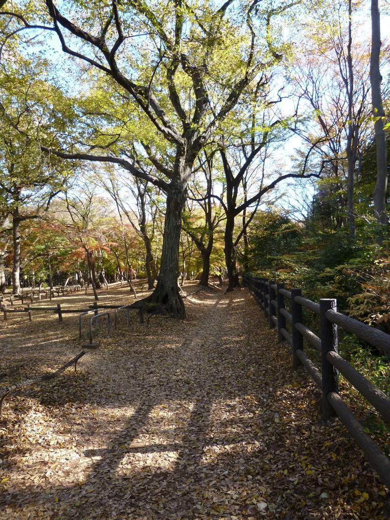 井の頭恩賜公園/玉川上水沿い(2013.11.29)