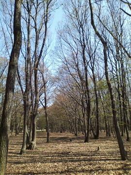 とらぬ狸の散歩〜野川沿いの風景 (H.23.4.13.撮影)