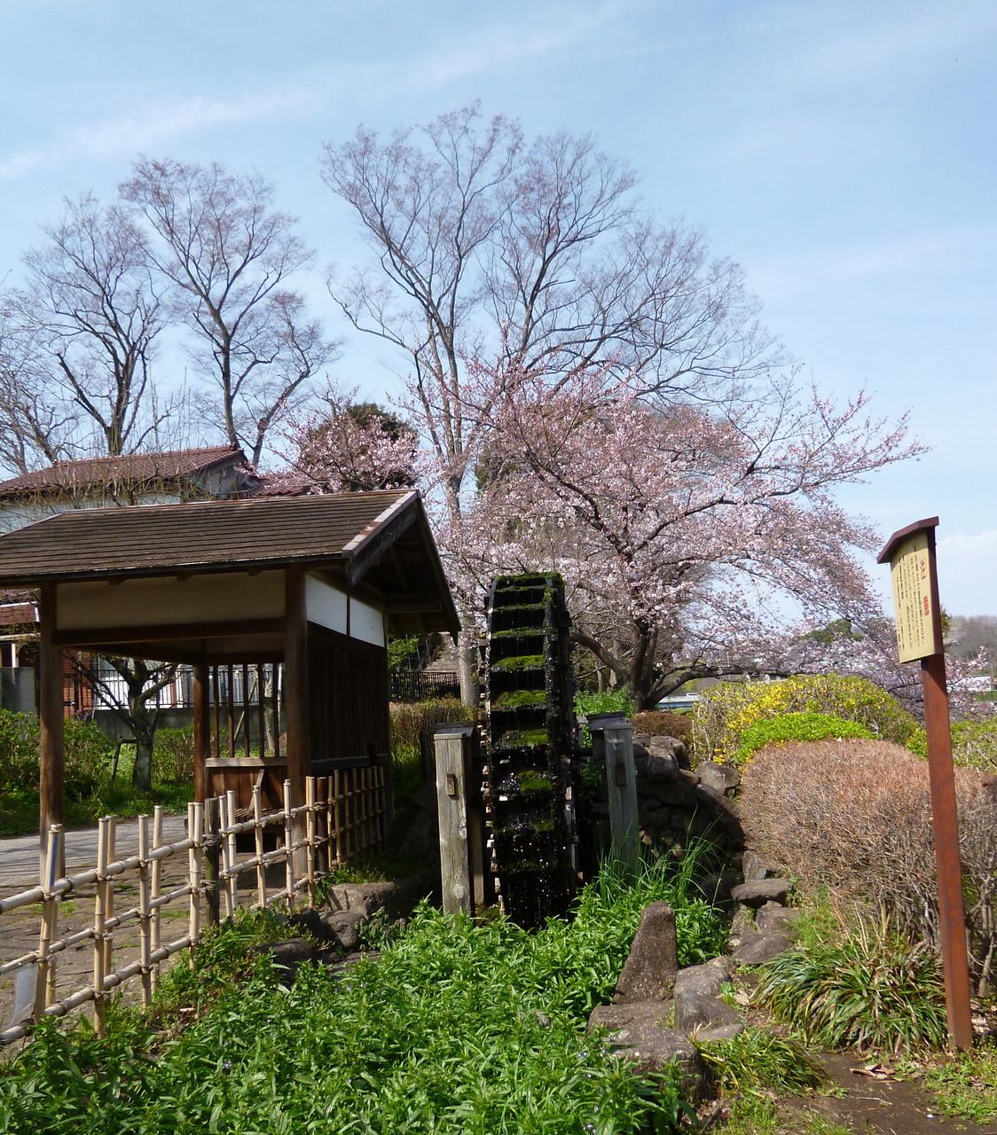 野川沿いの風景/水車(h28.3.31)