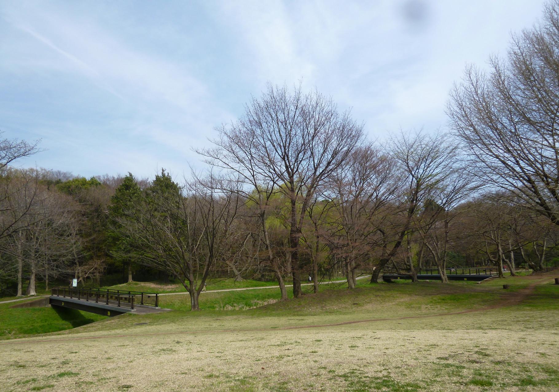 野川沿いの風景/樹々(h28.3.31)