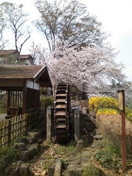 とらぬ狸の散歩〜野川沿いの風景(H.23.4.10 撮影)