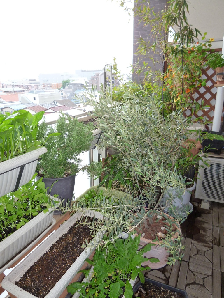 奥のナスタチウム(ハンギング)は冬も元気に1年中咲きっぱなしでした〜