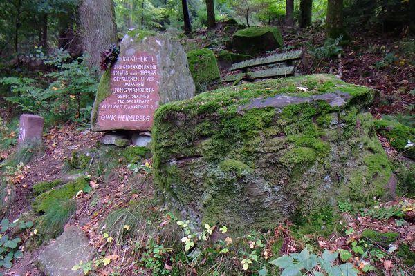 Gedenkeiche für die in den Kriegen vermissten Jungwanderer (OWK Heidelberg)