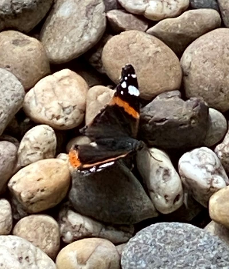 Ein Schmetterling kreuzt unseren Weg