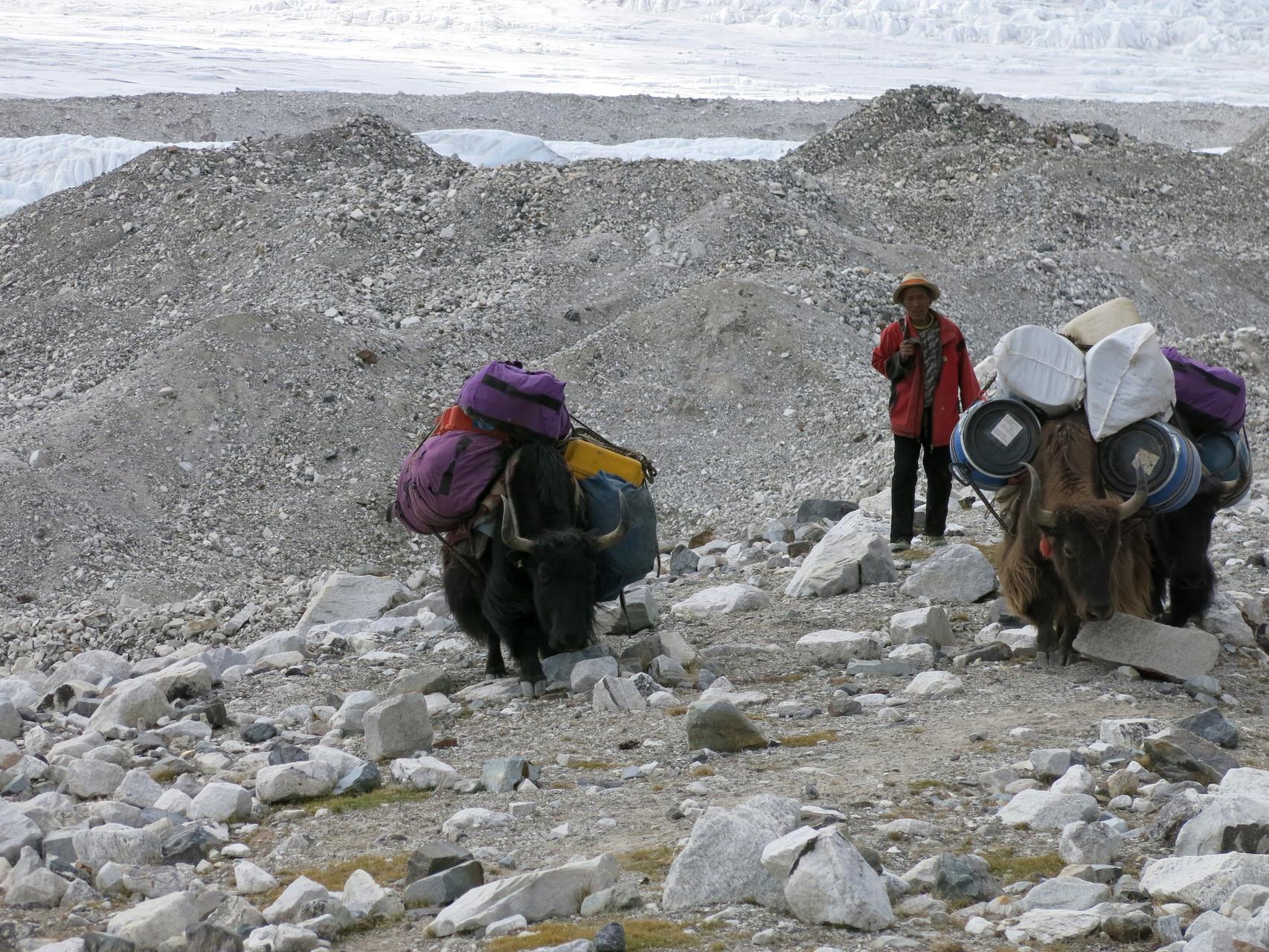Aufstieg mit Yaks (Bild aus 2013)