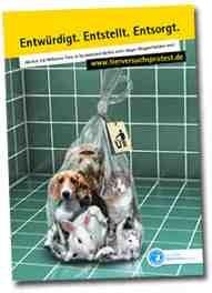 Tierschutz Labor Beagle