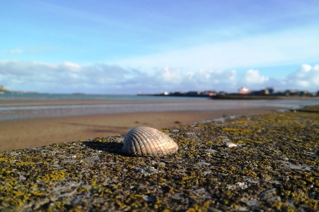 Am Strand von Howth