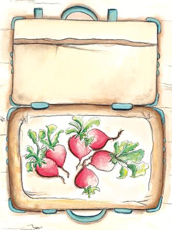 Illustration von Radieschen in einem Koffer wie im Kinderbuch Die Kusinusis im Gemüsebeet
