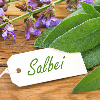 Nr. 63 Salbei (Fotolia)