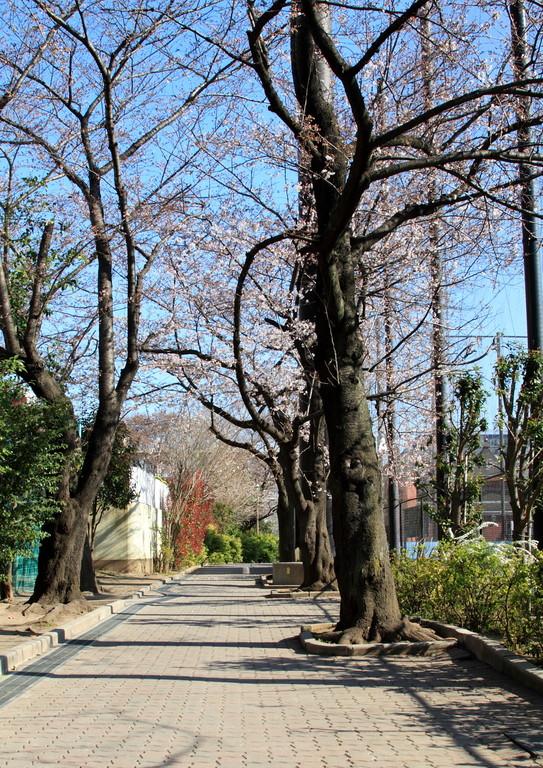 坂下二丁目 城北公園 桜並木
