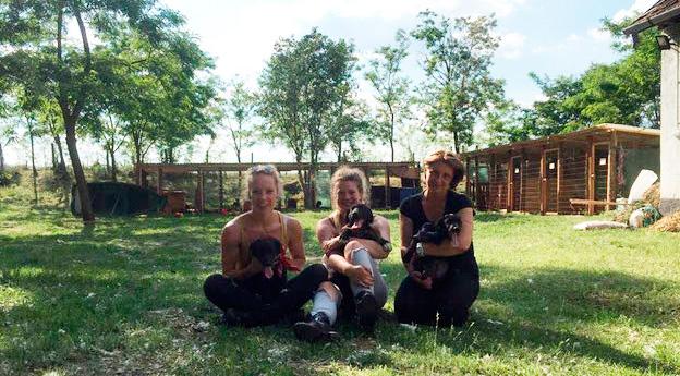 Das Auffanglager für Hunde neben der ehemaligen Tötungsstation in Nyirbatir (Ungarn)