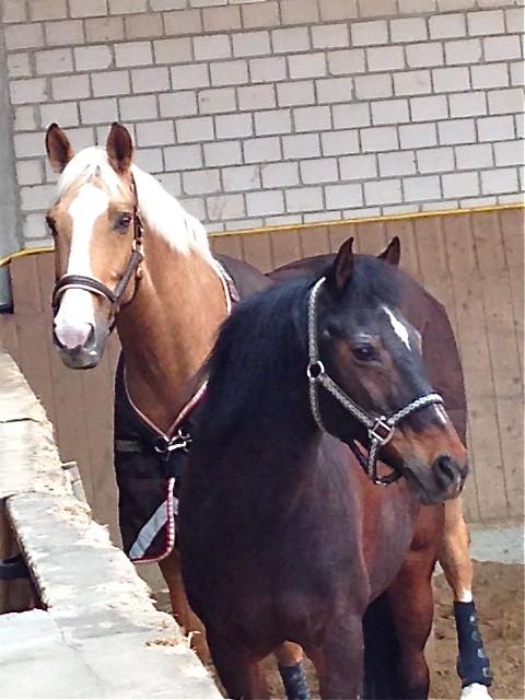 Midas mit seinem besten Freund Dante, Febr. 2014. Foto: Kim Radovan
