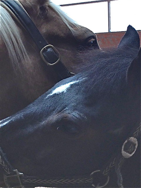 Nach endlos langen Monaten ist Midas Ende Februar 2014  endlich wieder bei uns. Mit Dante ist es immer noch eine besondere Freundschaft. Foto: Kim Radovan