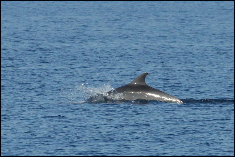 wir begegnen Delfinen-ein großartiges Erlebnis