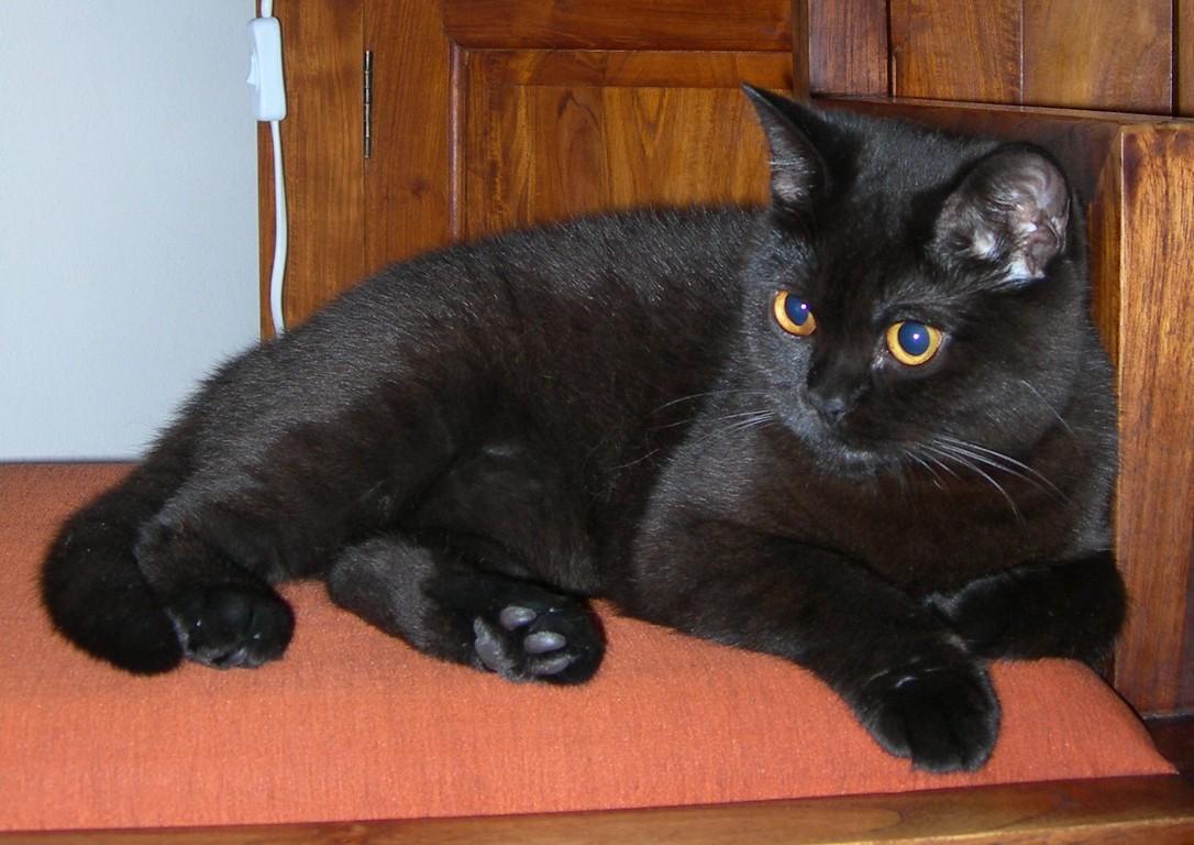 Coco Chanel, décédée en mai 2008, suite à l'erreur de diagnostic d'un vétérinaire
