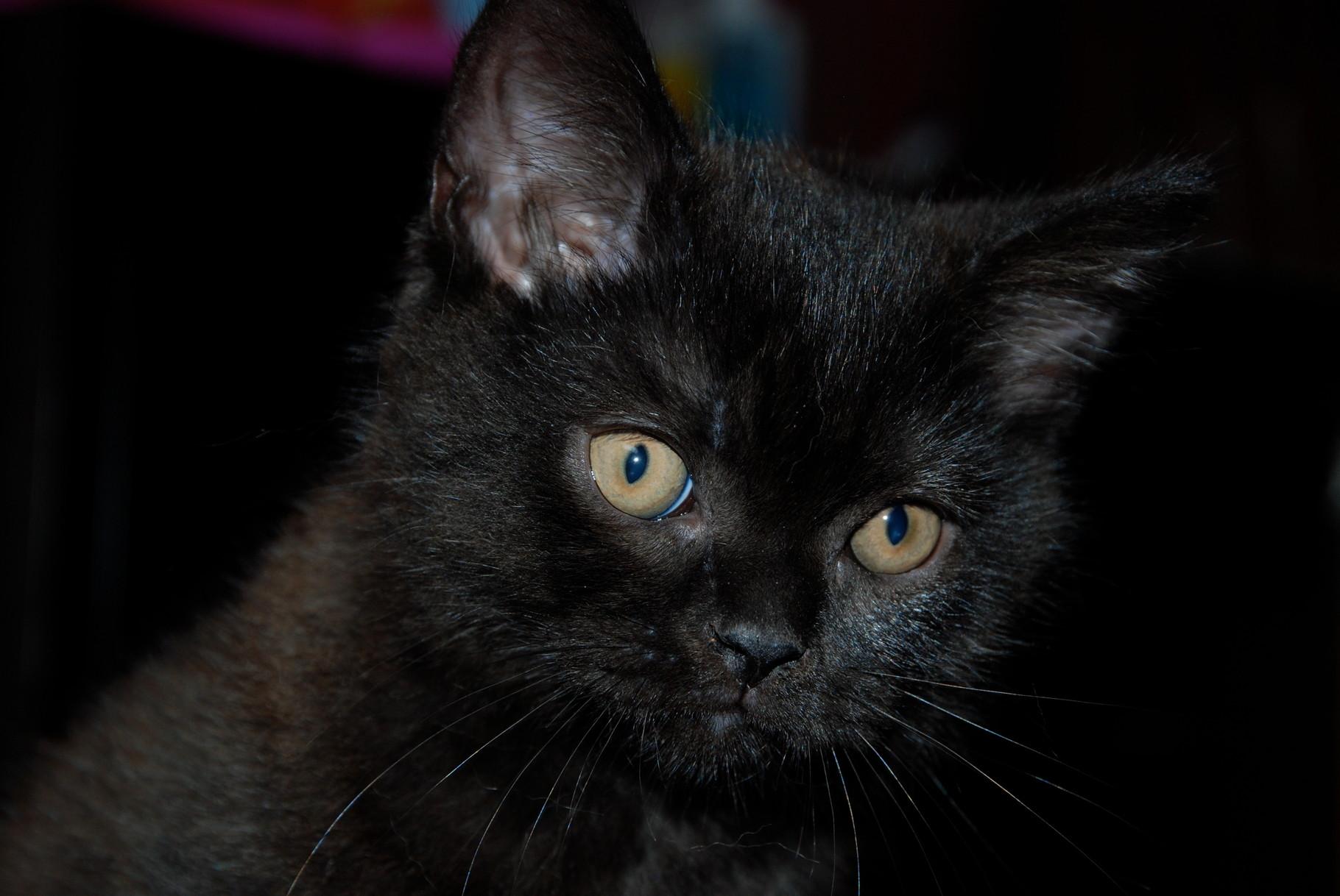 Petit mâle noir avec option: c'est Loulou.