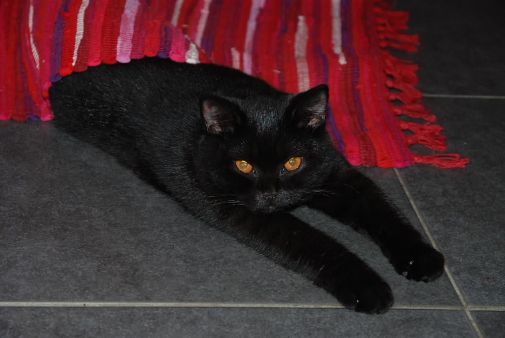 Elle adore dormir sous un tapis ou un cousin