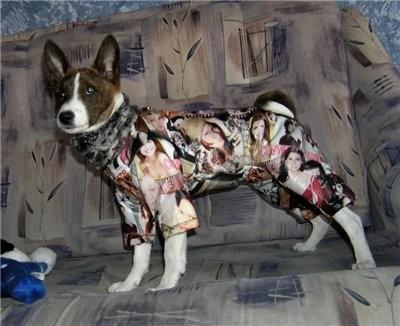 Комбинезон на щенка,100% непромакаемая курточная ткань, утеплитель (сверхлёгкий), подклад, воротник коротковорсовый ультрамягкий мех,цена: 1 080 руб