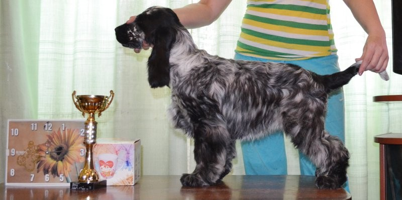 """Engraving, wall clock, prize to the Best puppy of breed """"an English cocker spaniel"""", CACIB, Mariupol 2012, UA"""