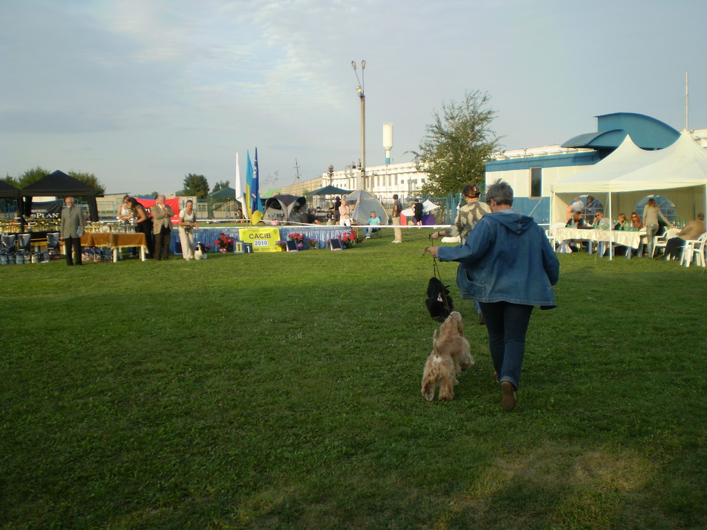 "Speciality Junior Show of National Speciality 2010 ""Prince of Spaniels 2010"""