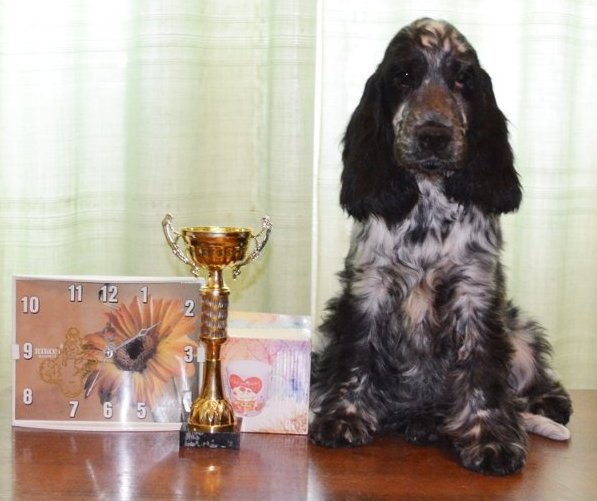 "Engraving, wall clock, prize to the Best puppy of breed ""an English cocker spaniel"", CACIB, Mariupol 2012, UA"