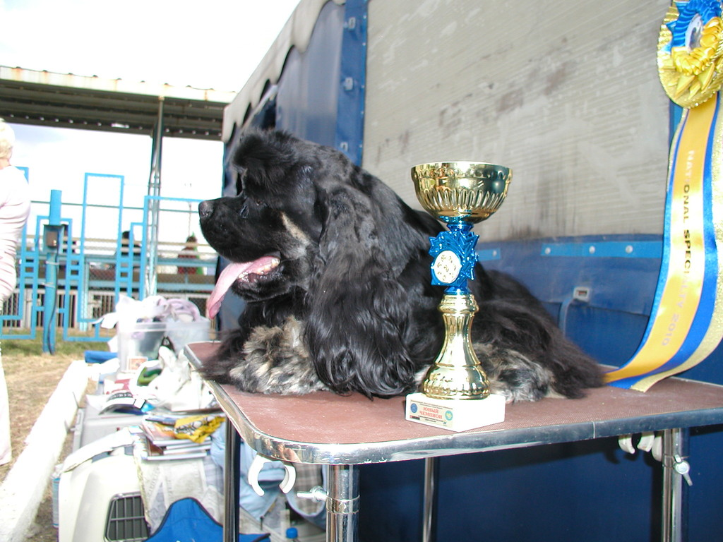 The best junior a dog of the Championship - the Young champion of Ukraine!!!