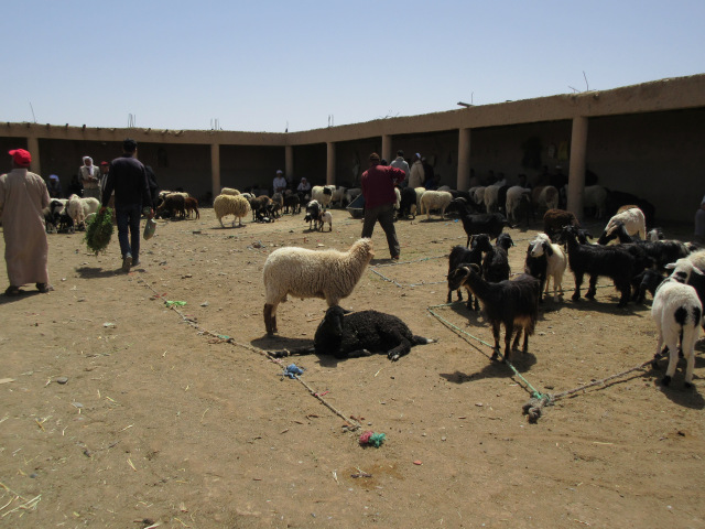 Sheep and Goat Market