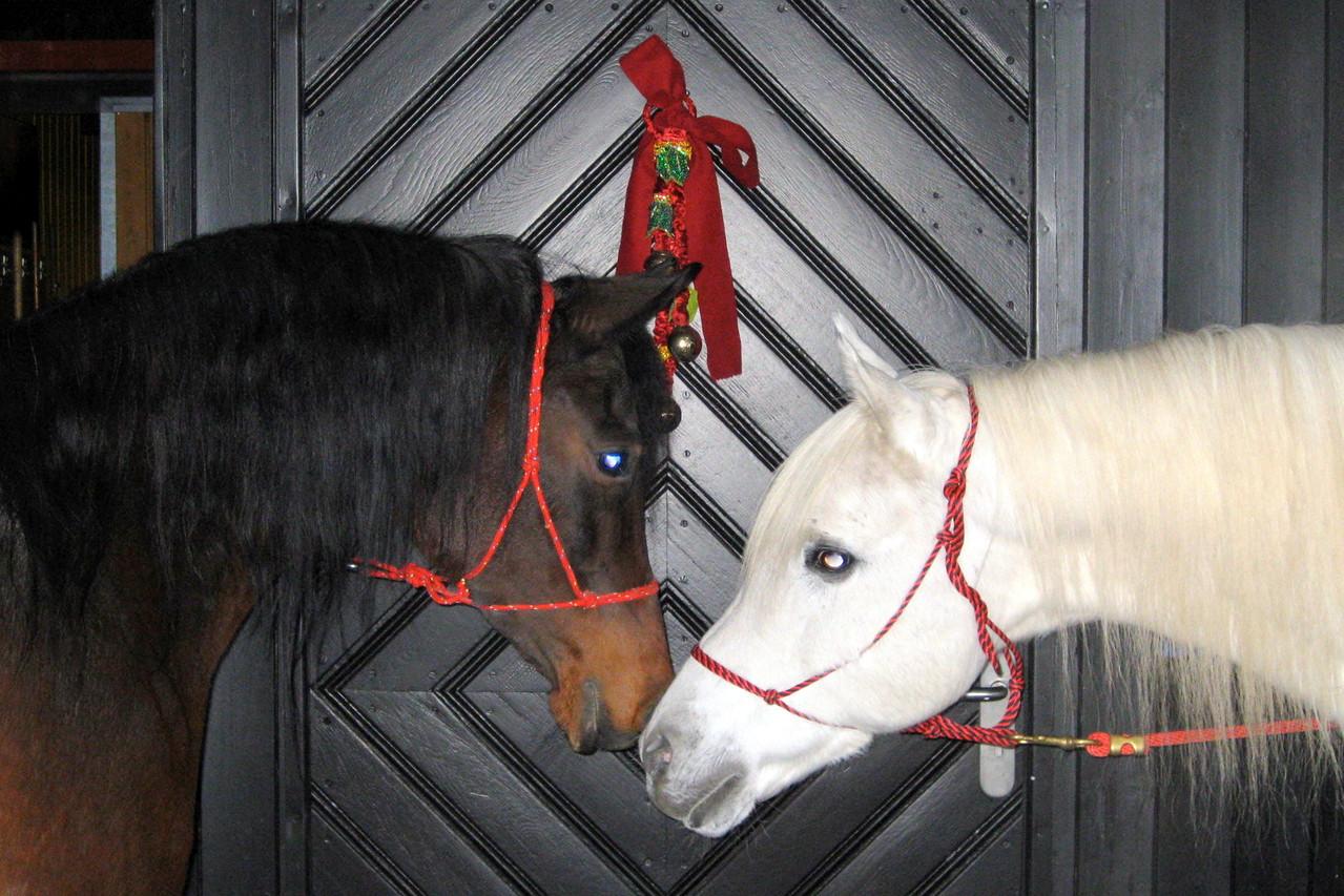 Pferde Impressionen