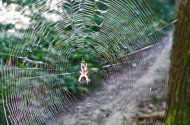 Spinne im Netz, Foto: A. Treffer