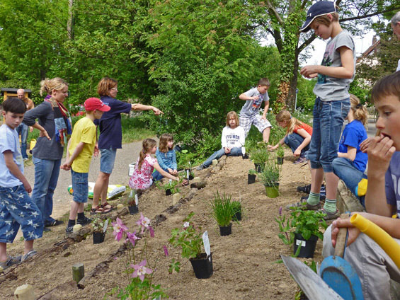 6. Mai nachmittags:  die großzügigen Spenden vom Florapark Wagner,  21 einheimische Stauden und ein Sack Torf-freier Pflanzenerde,  stehen zum Einsetzen bereit. Wo sollen jetzt die einzelnen Pflanzen hinkommen ?