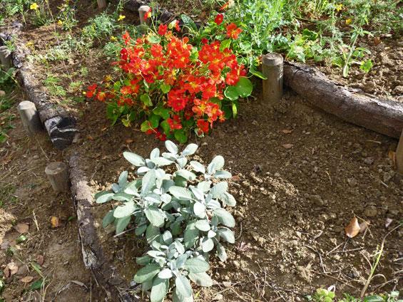 Anfang Oktober 2011: die Pflanzenterrasse hat sich gut entwickelt