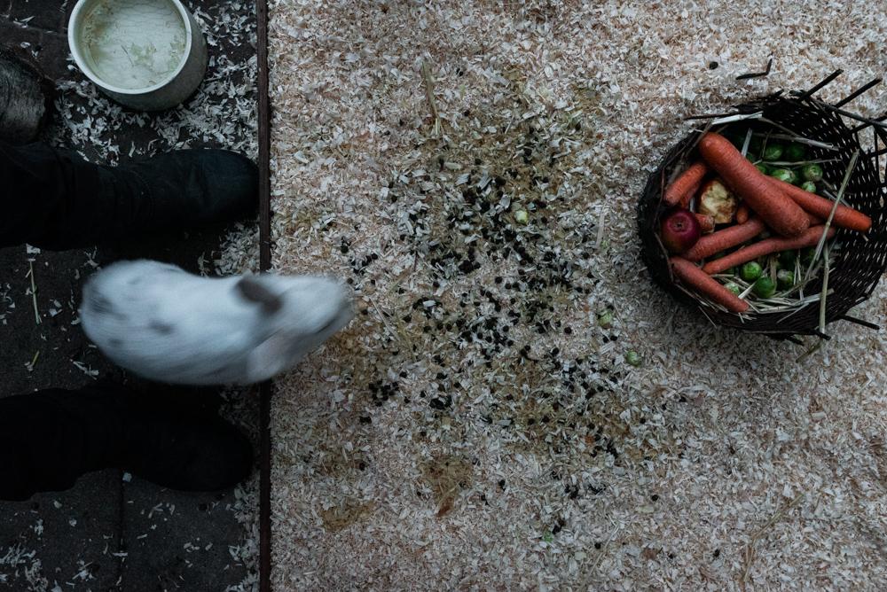 Fotoprojekt Dezember Momente mit Kaninchen im Stall