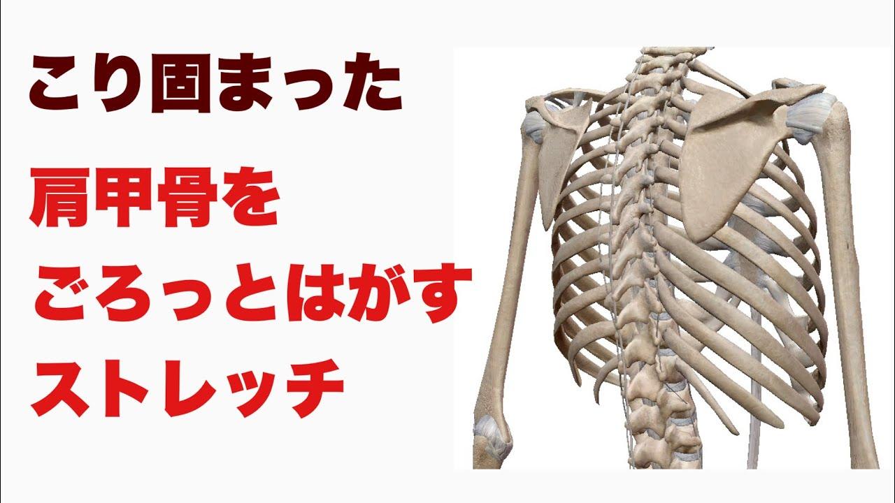 こり固まった肩甲骨をごろっとはがすストレッチ
