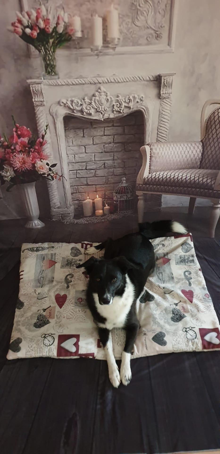 swiss hundeleinen, Hundebox Decke