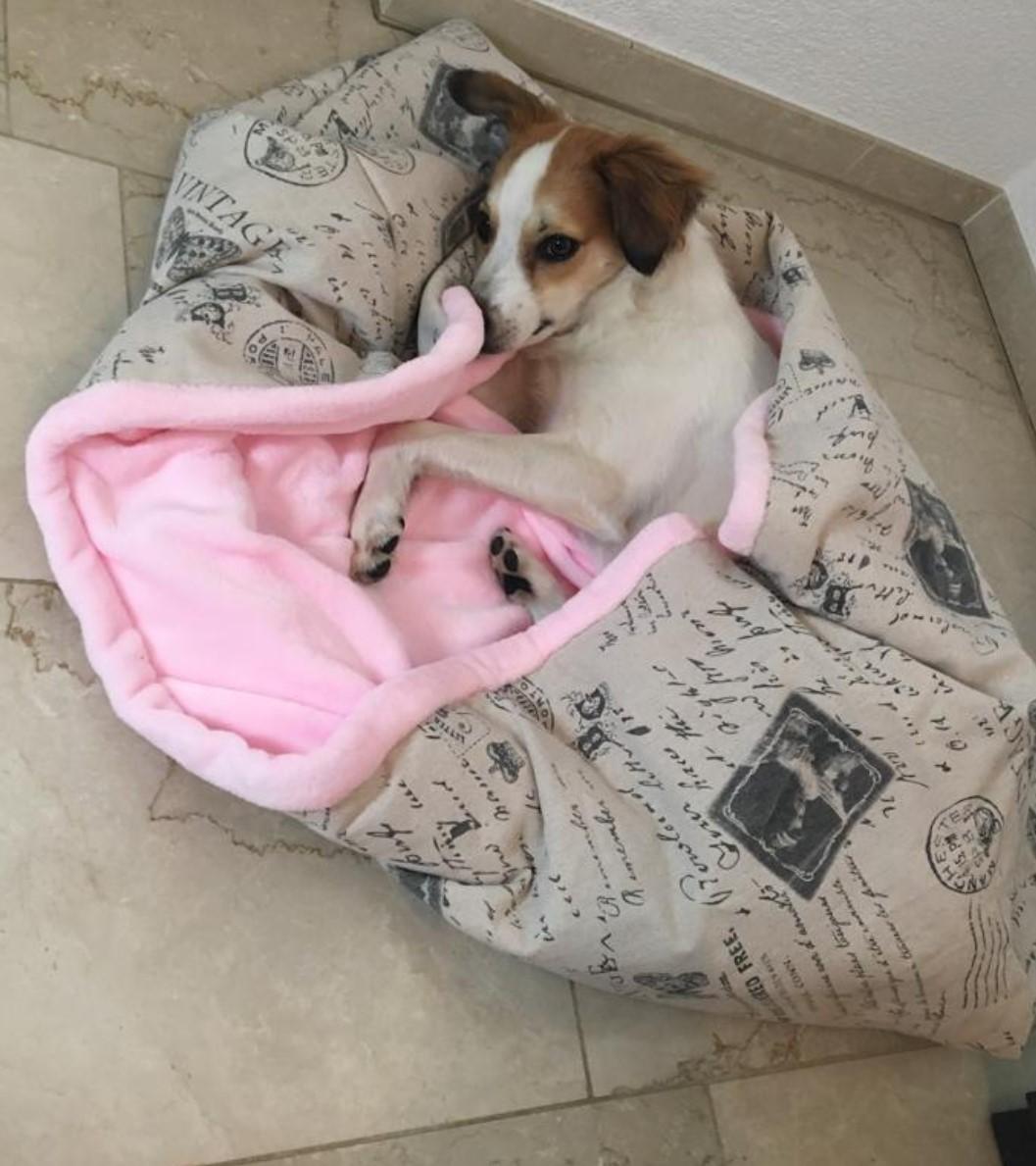 swiss hundeleinen- Hundeschlafsack, Hundedecke, Hundekissen, Schlafplatz,Wendeschlafsack,