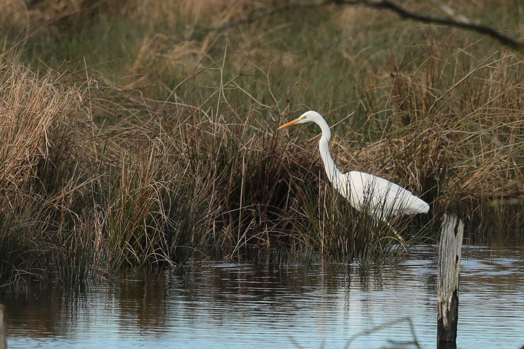 Mittwinterzählung der Wasservögel 2021