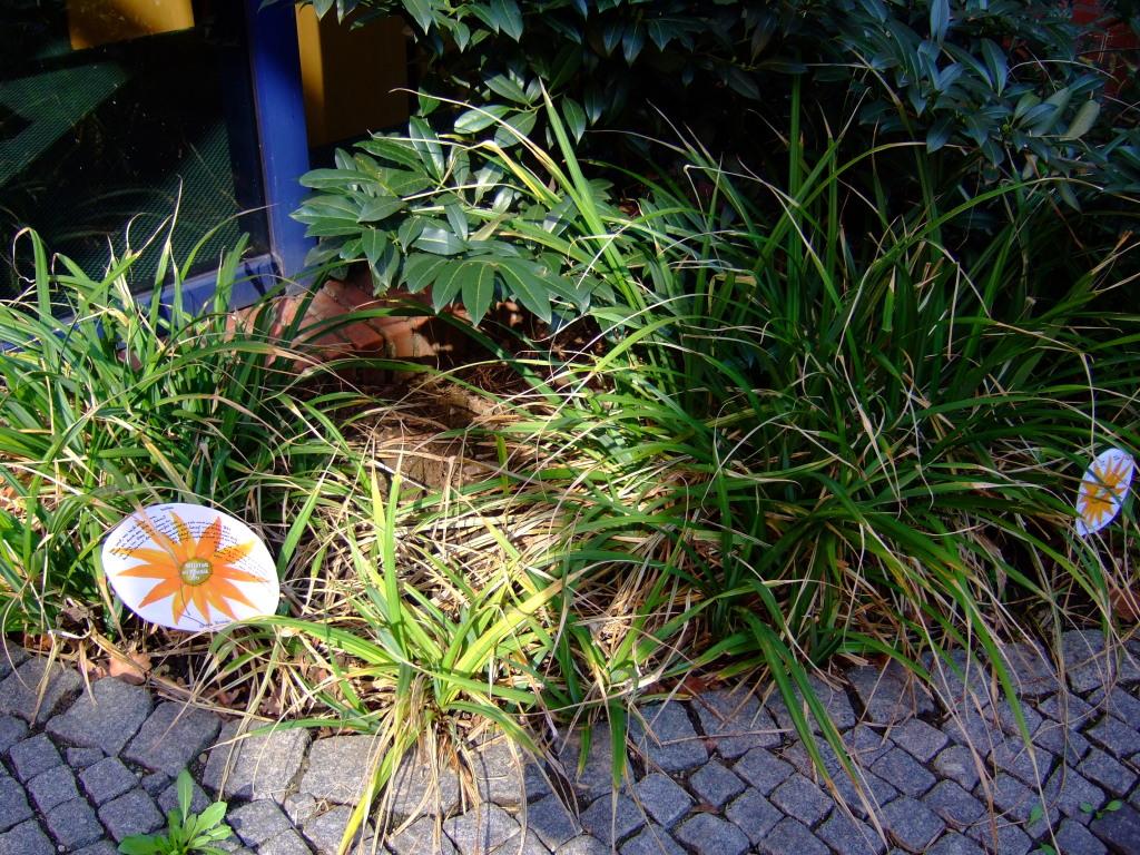 Poesieblumen im Innenhof