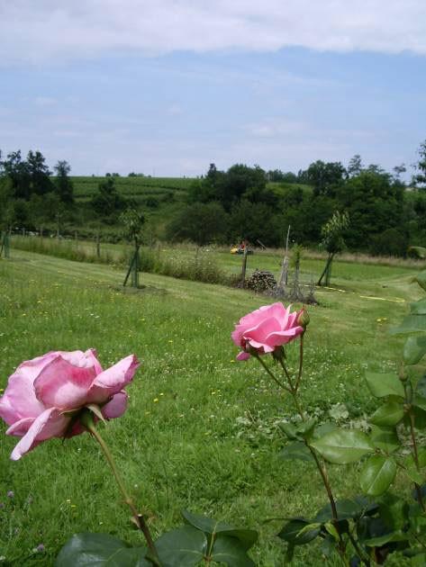 Gîte Ruch- jardin privatif, vue sur les vignes